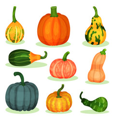 flat set of different ripe pumpkins vector image