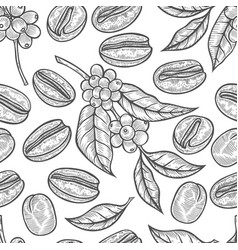 leaves and fruits of coffee vector image