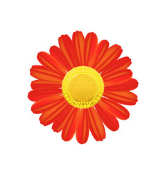 red flower icon colorful solid pattern on a white vector image vector image