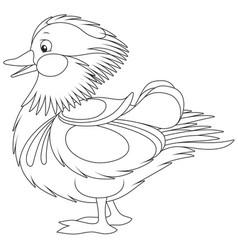 amazing mandarin duck vector image