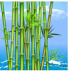 bamboo2 vector image