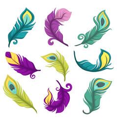 feathers peacock festive decor bird plumage vector image