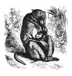 Mother and infant baboon vintage vector