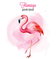 watercolor flamingo pink bird portrait vector image