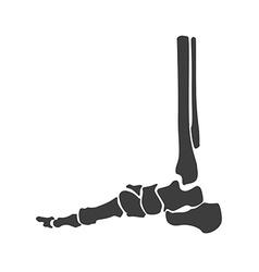 Foot bone anatomy vector image