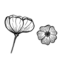 Ink flowers vector image