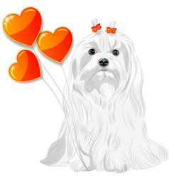 Valentine card with dog Maltese and hearts vector image vector image