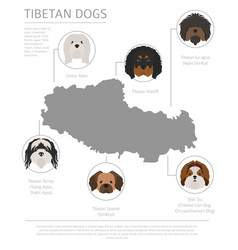 dogs by country of origin tibetan dog breeds vector image