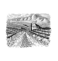Italian vineyard and road vector