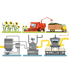 sunflower oil production process harvesting vector image