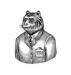 tiger character beast doctor fashionable animal vector image