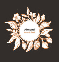 Almond design in circle natural nut botanical vector