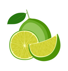 lime whole fruit half and slice on white vector image
