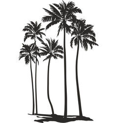 palms trees vector image