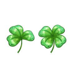 Realistic clover leaves vector