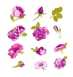 set floral design elements flower collection vector image