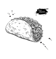 Taco drawing traditional mexican food vector