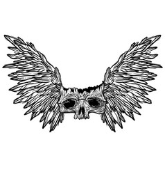 with a human skull and wings vector image