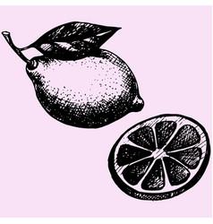 lemon with leaf vector image vector image
