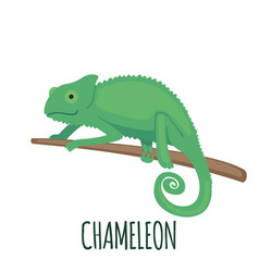 cute green chameleon in flat style vector image