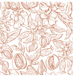 almond seamless pattern floral background vector image