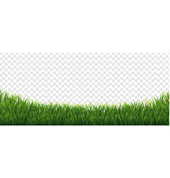 Grass frame with in isolated transparent vector