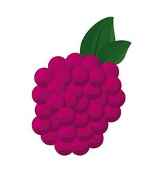 Isolated sweet blackberry vector