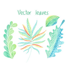 Leaves set hand drawn foliage collection vector