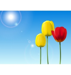 Red and yellow tulips on a blue sky background vector image