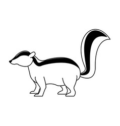 skunk wild animal on black and white vector image