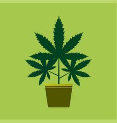 marijuana or cannabis vector image