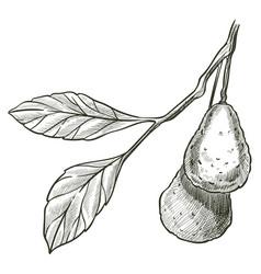avocado vegan and vegetarian vegetable sketch vector image