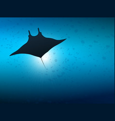 big manta ray in ocean water underwater life vector image
