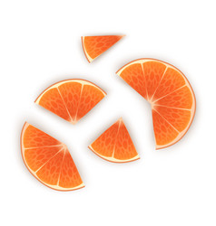 bright set colorful half slices orange vector image