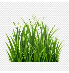 Egreengrassborderiagreen grass border in isolated vector