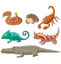 Isolated picture poisonous animals vector