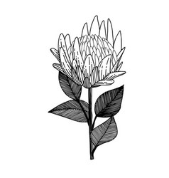 exotic tropical hawaiian summer flower vector image