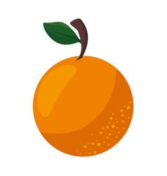 Isolated sweet orange vector