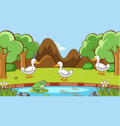 scene with ducks and frog in park vector image