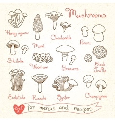 Set drawings of mushrooms for design menus vector