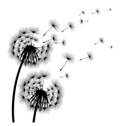 silhouette of a flowering dandelion vector image