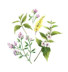 watercolor hand painted arrangement vector image