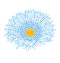 Beautiful blue gerbera isolated on white backgroun vector