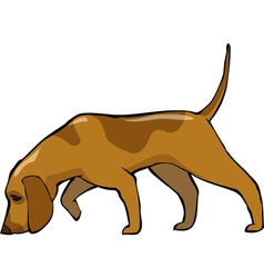 Bloodhound dog vector