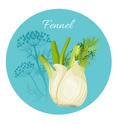 Fennel condiment green seasoning with edible root vector