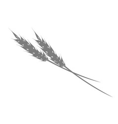 Silhouette of ear of rye or wheat on white vector