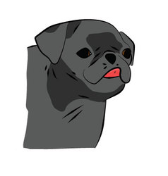 Small Black Pug vector image