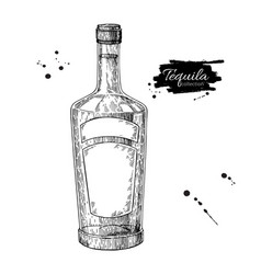 tequila bottle drawing vodka cocktail alcohol vector image