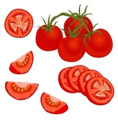 Colorful of tomato vector