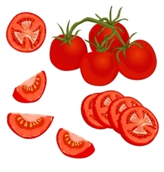colorful tomato vector image